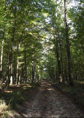 Érték, élmény, erdő